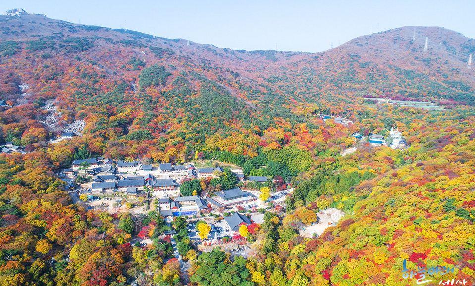 autumn foliage in busan busan attractions in autumn busan autumn2