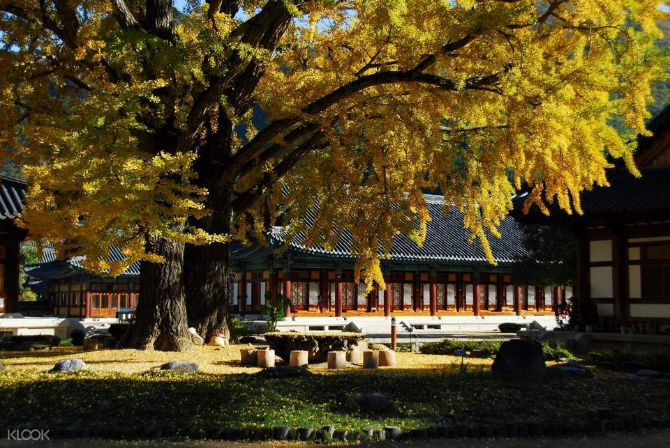 autumn foliage in busan busan attractions in autumn busan autumn23