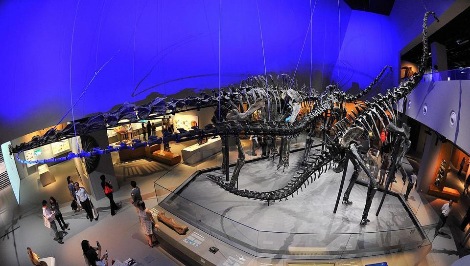 1Lee Kong Chian Natural History Museum singapore