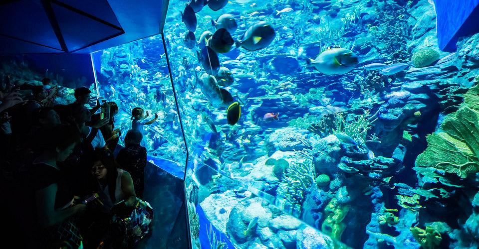 GrandAquarium ocean park