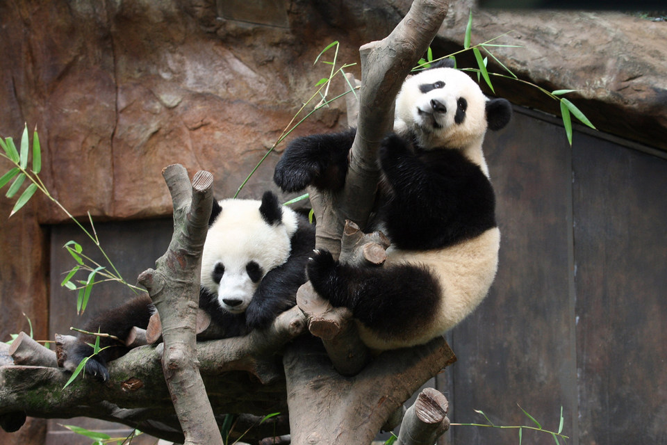 animals asian ocean park hong kong