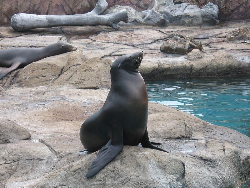 Ocean-Park-seal