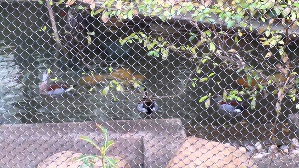 asian animals ocean park hk