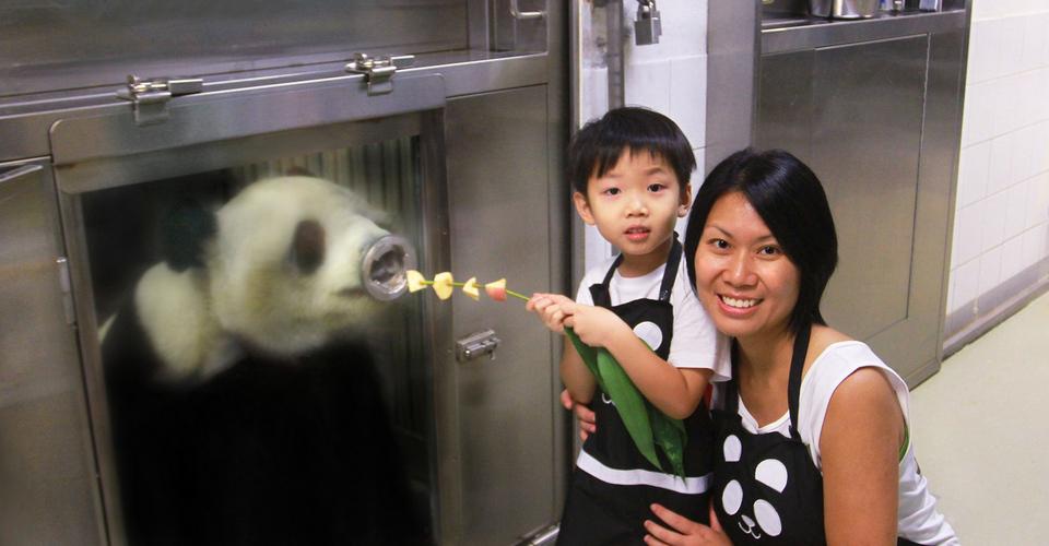 Meet the giant panda. Credit: ocean park hong kong blog.