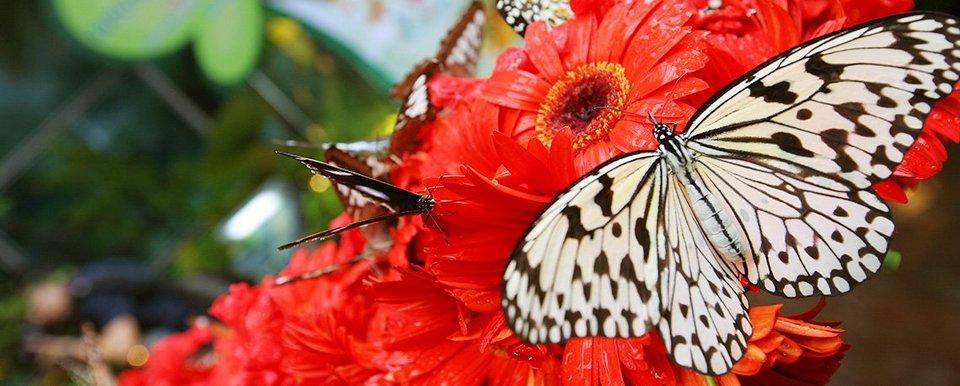 Butterfly Garden changi airport