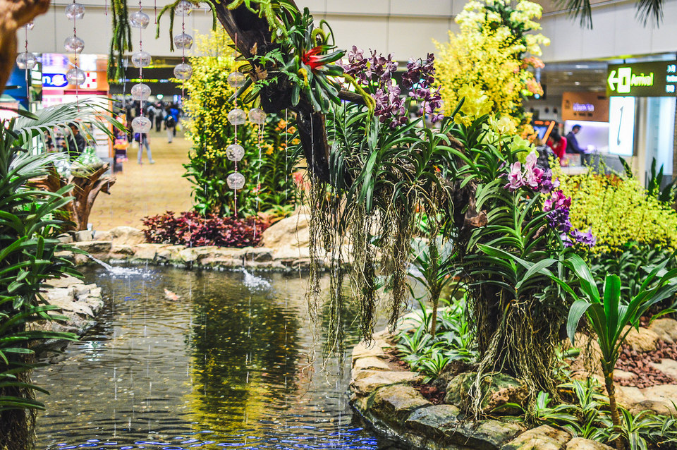 orchid garden singapore changi Credit: What to do in Changi Airport blog.