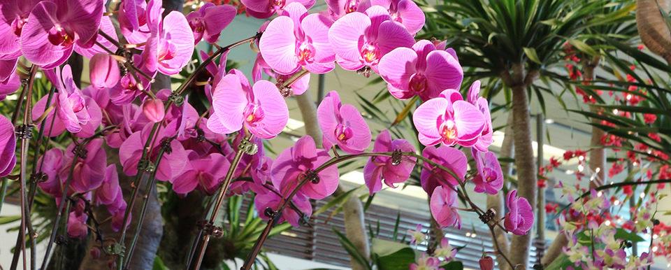 orchid garden singapore changi