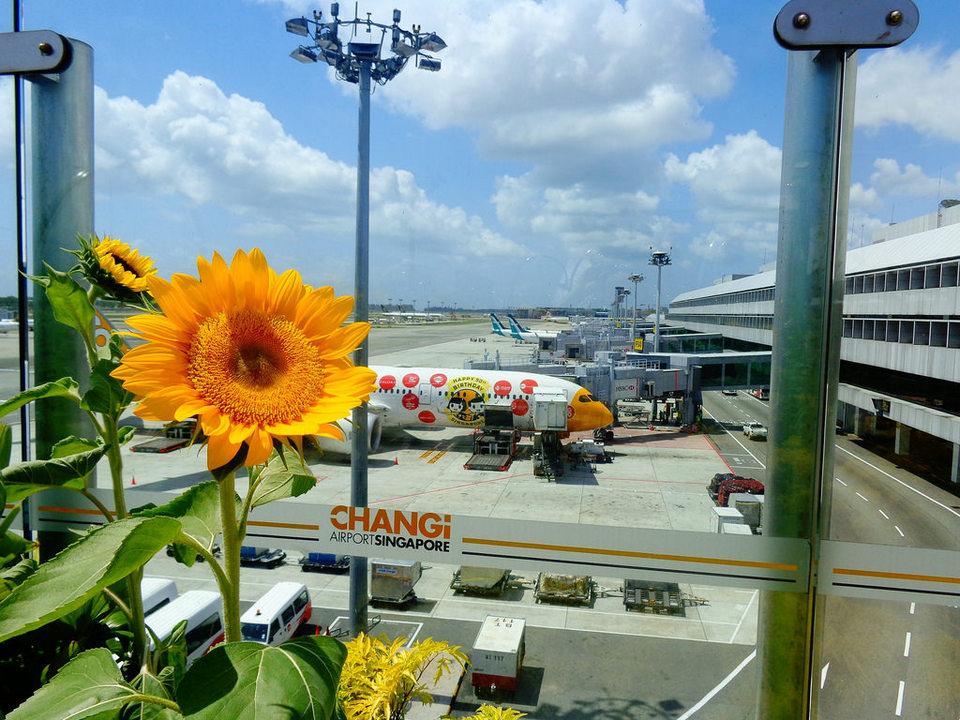 sunflower_garden_9006