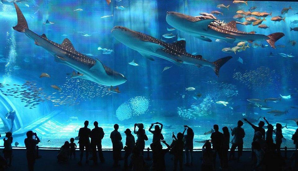 91756-Osaka-Aquarium-Kaiyukan