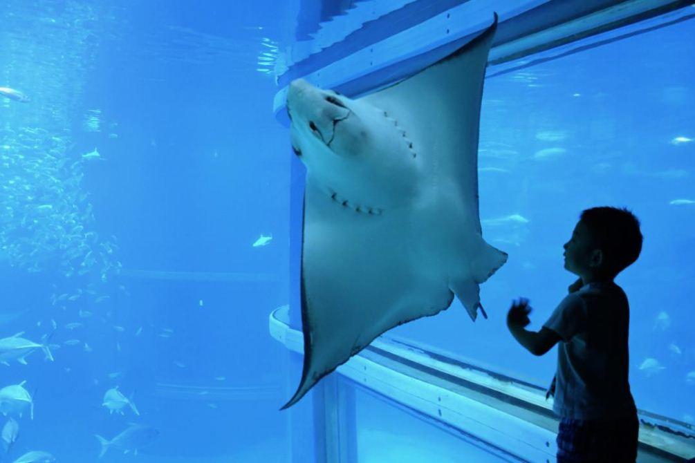 Osaka Aquarium Kaiyukan15