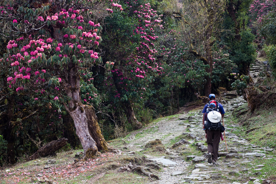 the-rhododendron-trail bhutan
