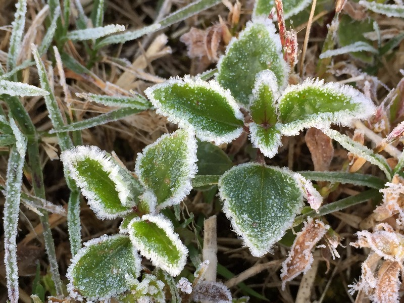 Doi Inthanon National Park sees first frost of the year as temperatures drop.4