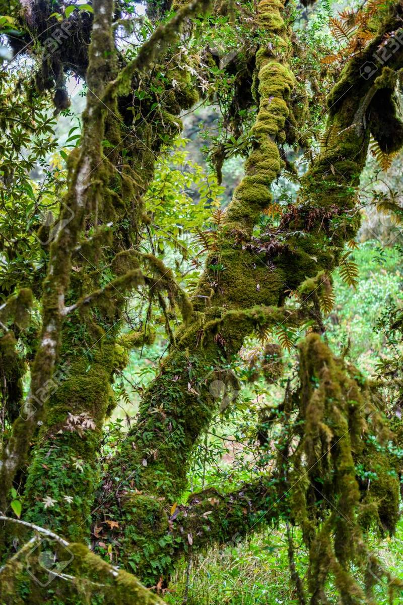 Moss on the tree in Ang Ka Luang Nature Trail is an educational nature trail inside