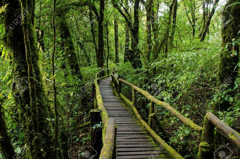 Rain forest at Ang Ka nature trail in doi inthanon national park, Chiangmai ,Thailand