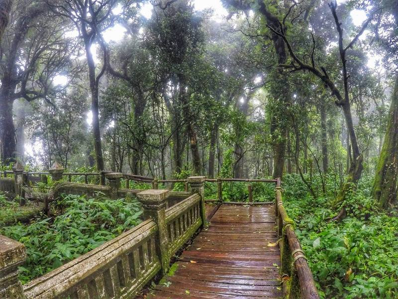 Ang Ka Nature Trail - Ang Ka Nature Trail Doi Inthanon National Park, Chiangmai, Thailand