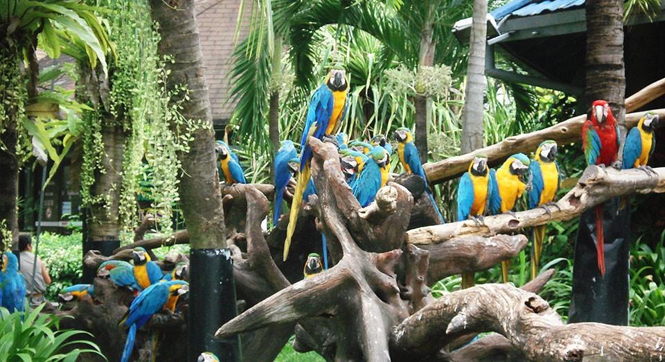 Bird show safari bangkok