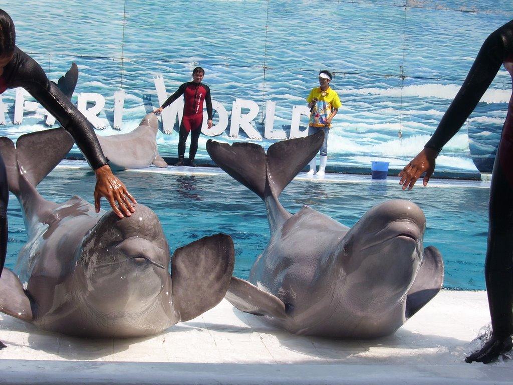 Dolphin Show safari bangkok