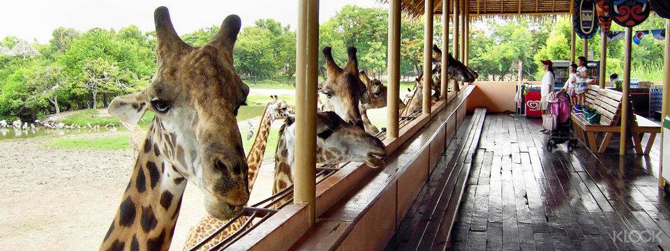 bkk-safariworld13