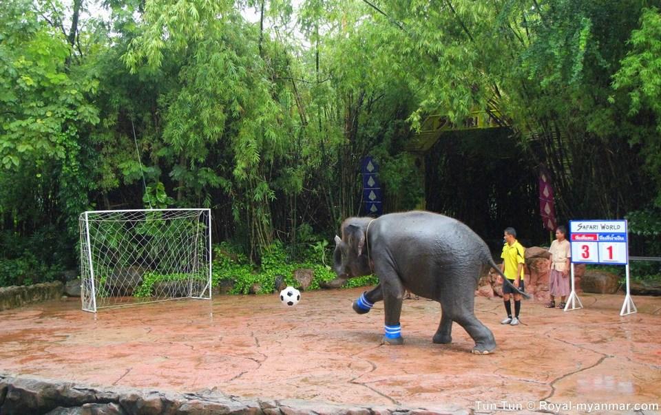 elephant show safari-world-bangkok-thai-lan1