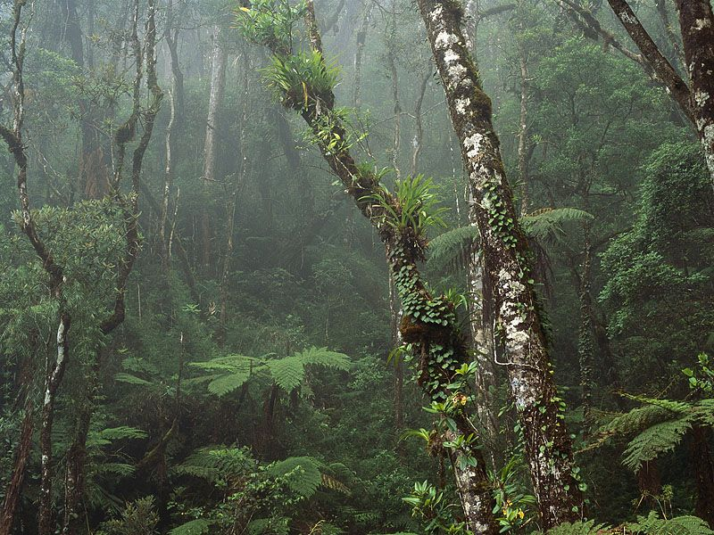 Cloud Forest, Mount Kinabalu National Park, Borneo, Malaysia