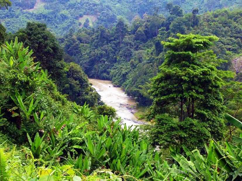 forest kinabalu malaysia