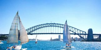 White sailboats, bridge in Sydney Harbour against clear blue sky