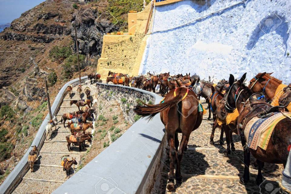 donkeys-from-santorini-greece-on-the-way-to-the-old-port-of-fira