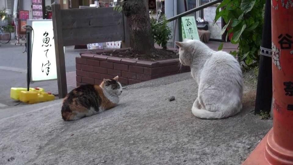 yanaka cats