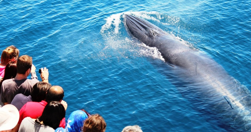 whale watching auckland itinerary 7 days, 7 days in auckland