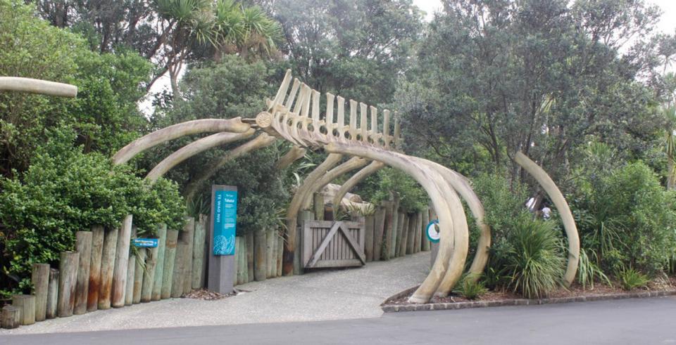 Ribcage at Te Wao Nui