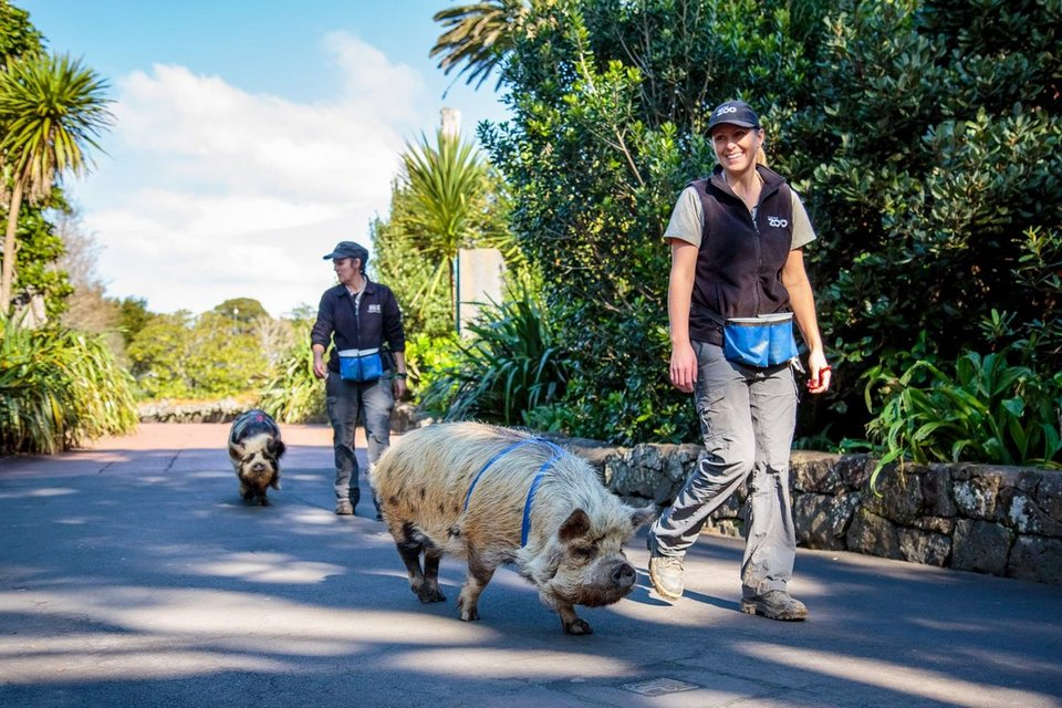 Auckland Zoo.34
