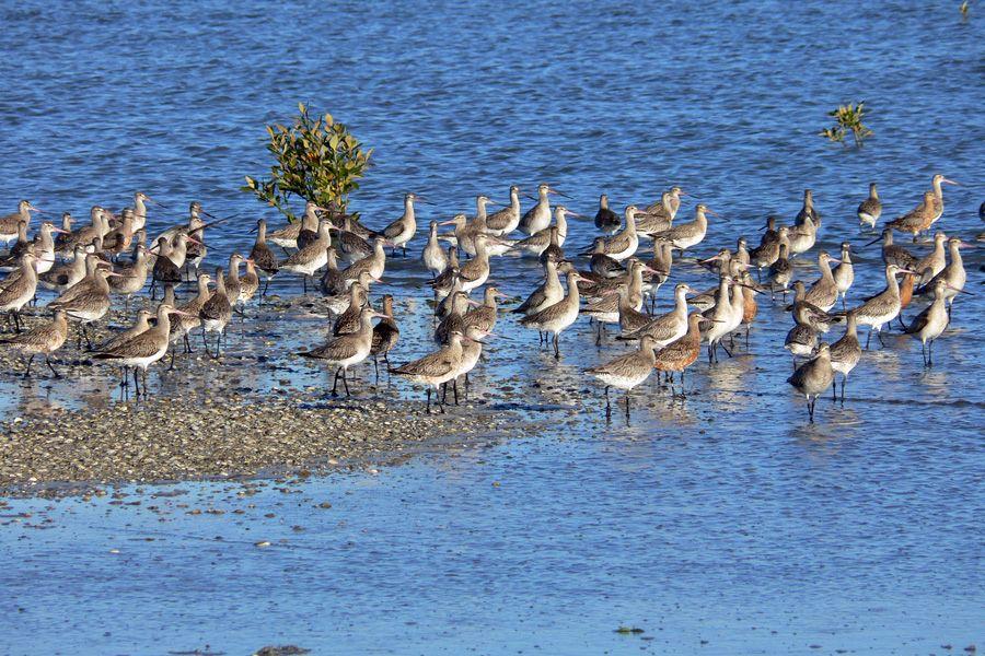 Miranda Bird Sanctuary auckland (1)