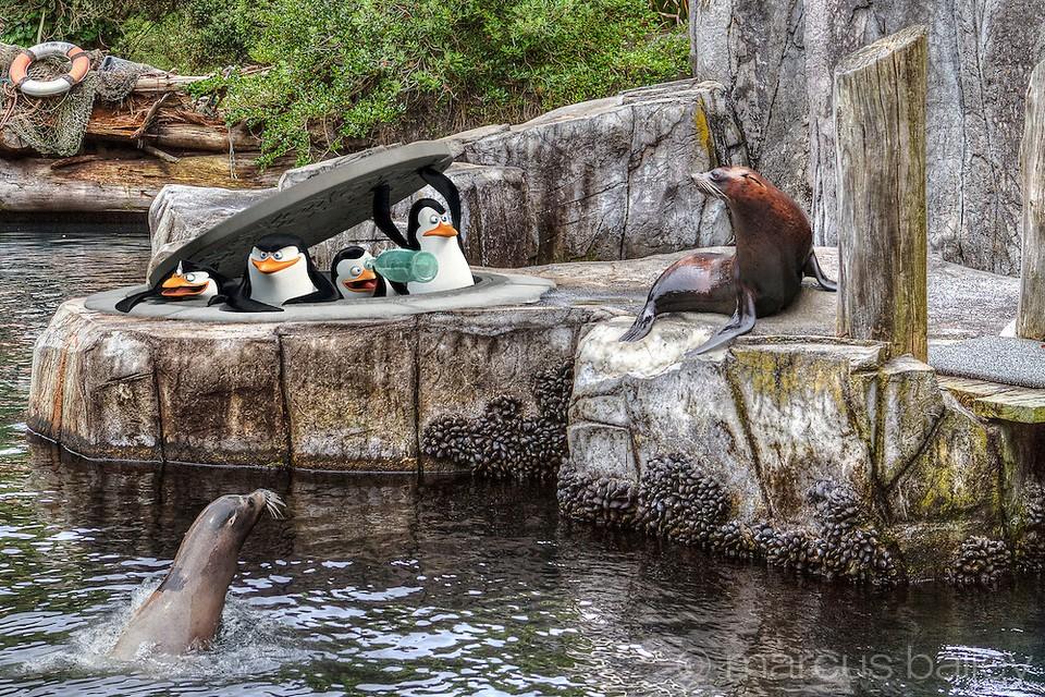 Penguins-of-Madagascar-Auckland-Zoo