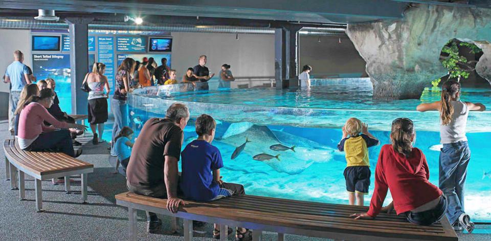 kelly-tarlton-sea-life-aquarium-auckland61