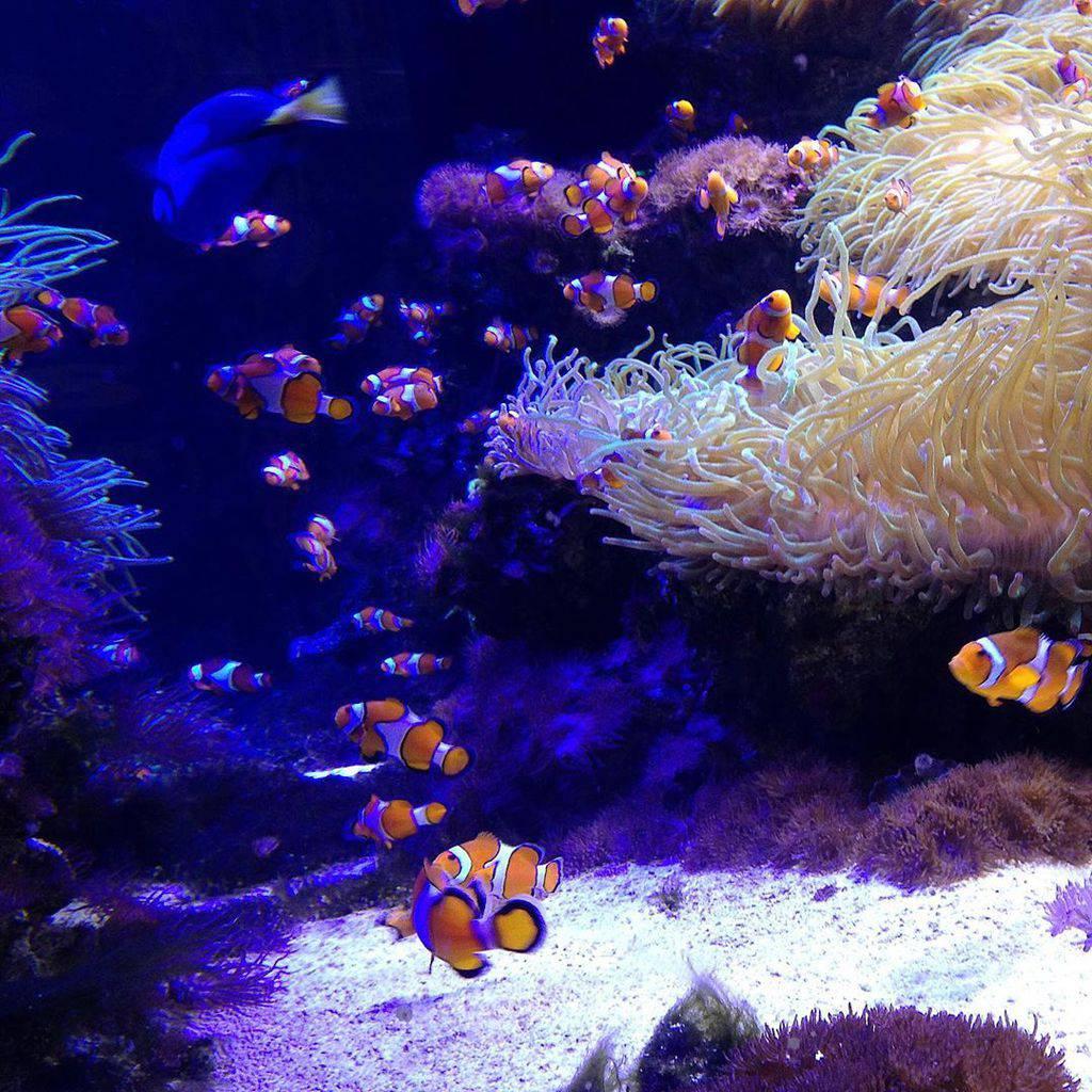 A miniature ocean envelops you in SEA LIFE Kelly Tarlton's Aquarium.