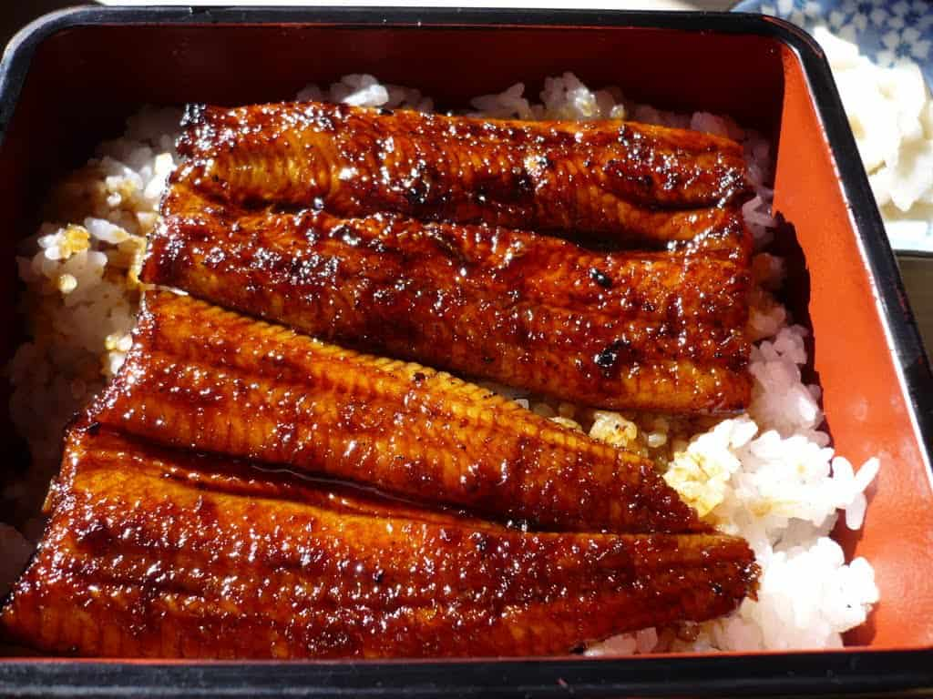 unagi grilled eel japan food (1)