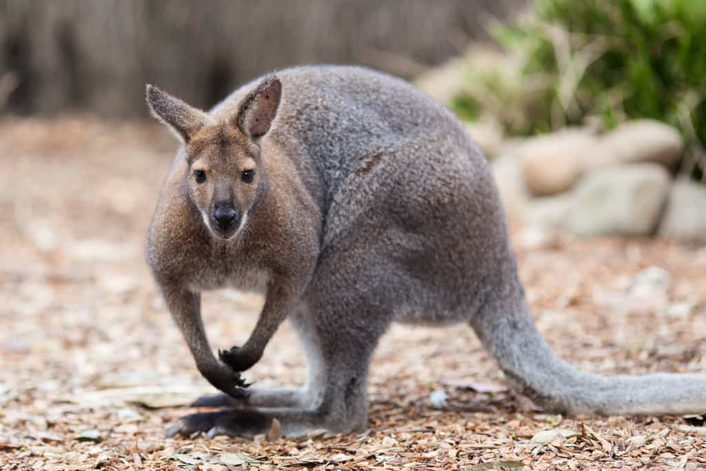 Taronga Zoo Sydney (1)