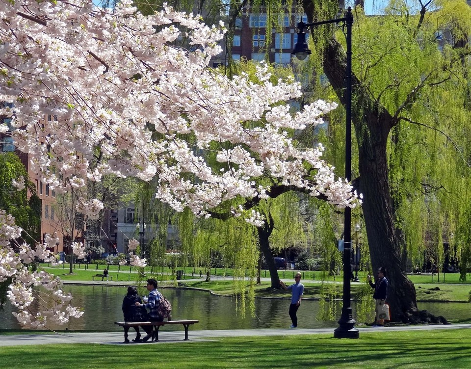 boston in spring time Boston city guide, When is the best time to travel to Boston