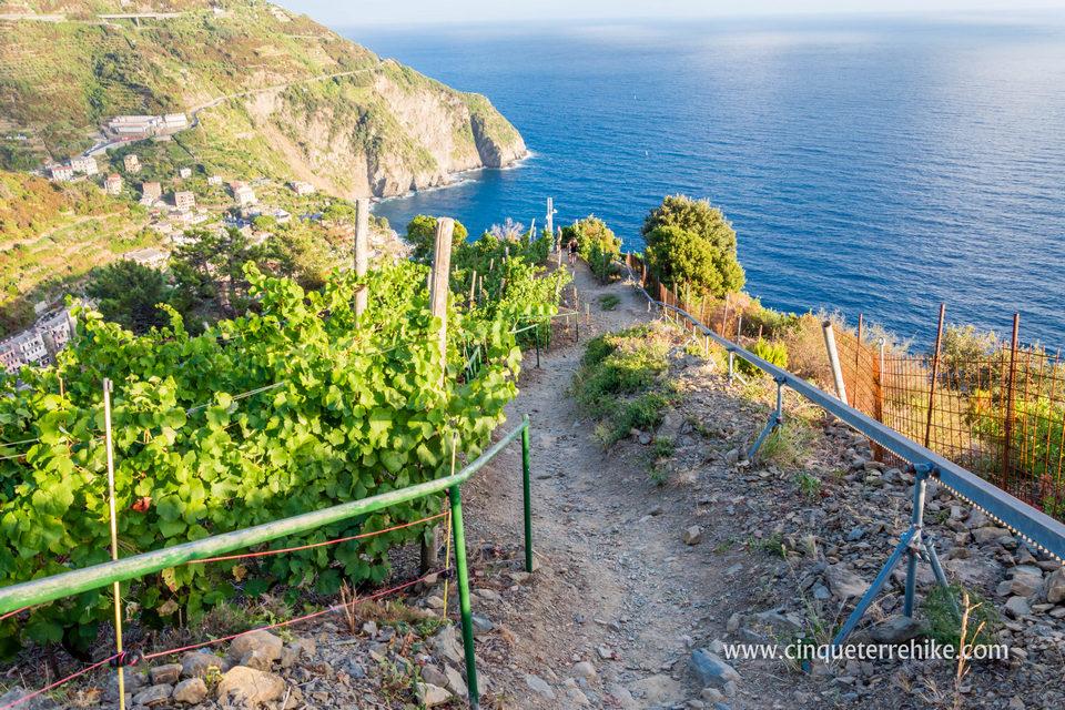 The path from Manarola to Riomaggiore, Beccara trail