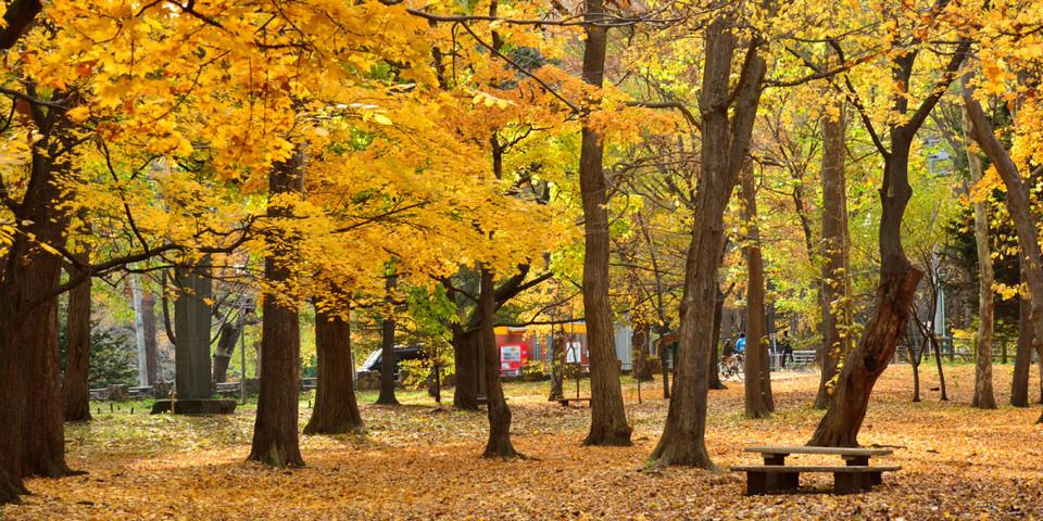 Maruyama Park sapporo (1)