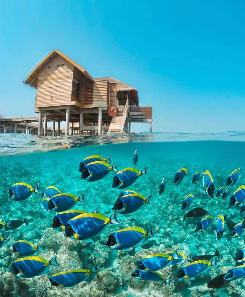 Right at the foot of the houses on stilts lying together reaching out to the sea, through the clear blue water, you can also see each group of fish swimming.