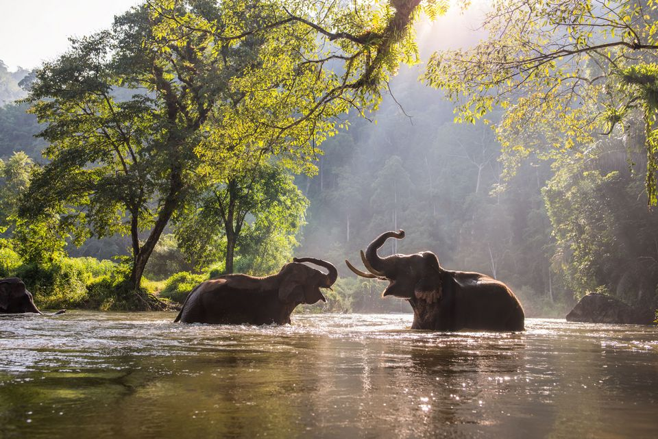 elephants-kanchanaburi-thailand,kanchanaburi travel blog,kanchanaburi day trip,kanchanaburi blog,kanchanaburi travel guide