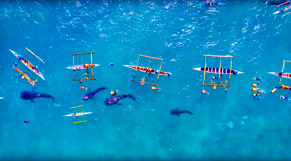 oslob cebu whale shark,cebu guide,cebu blog,cebu island travel guide,cebu travel blog,cebu travel guide,cebu trip blog (1)