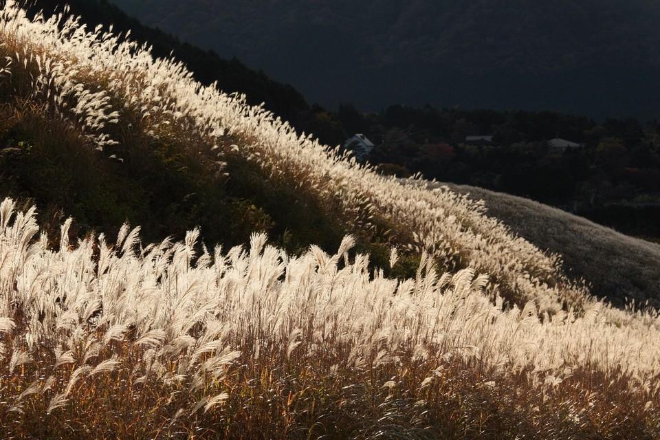 hakone grass field