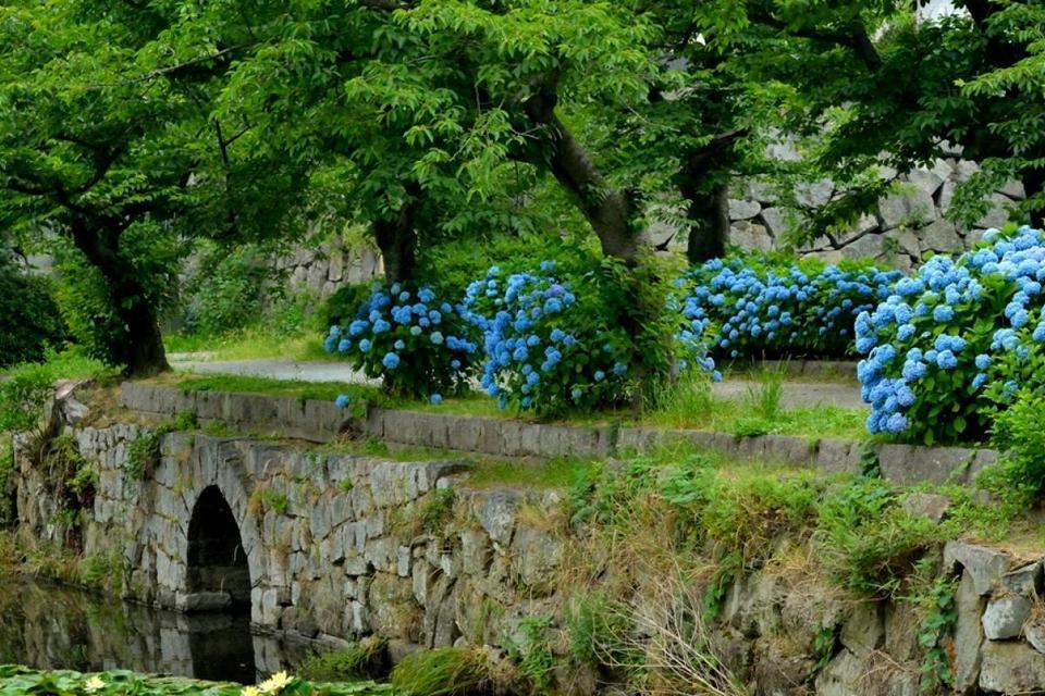 Fukuoka Castle Ruins,fukuoka travel blog (1)