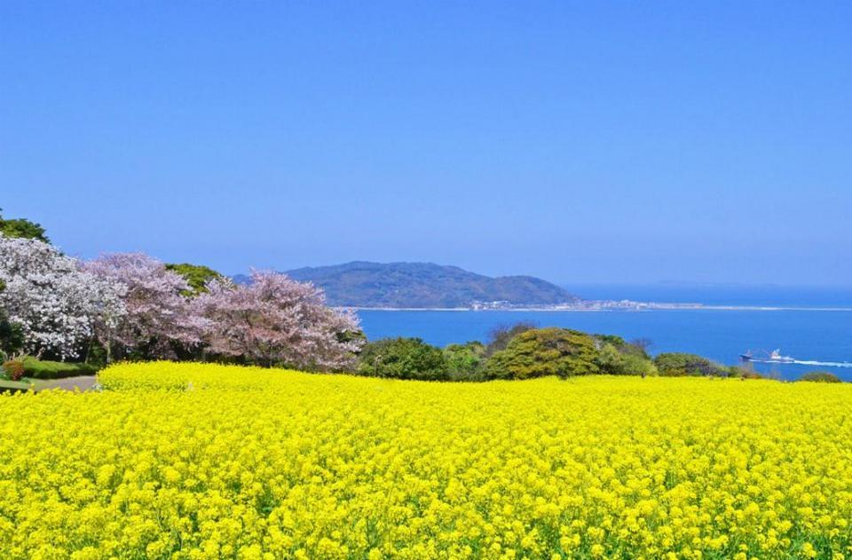 Nokonoshima Island Park (1)