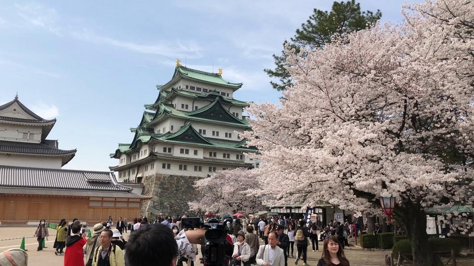nagoya castle in spring.1