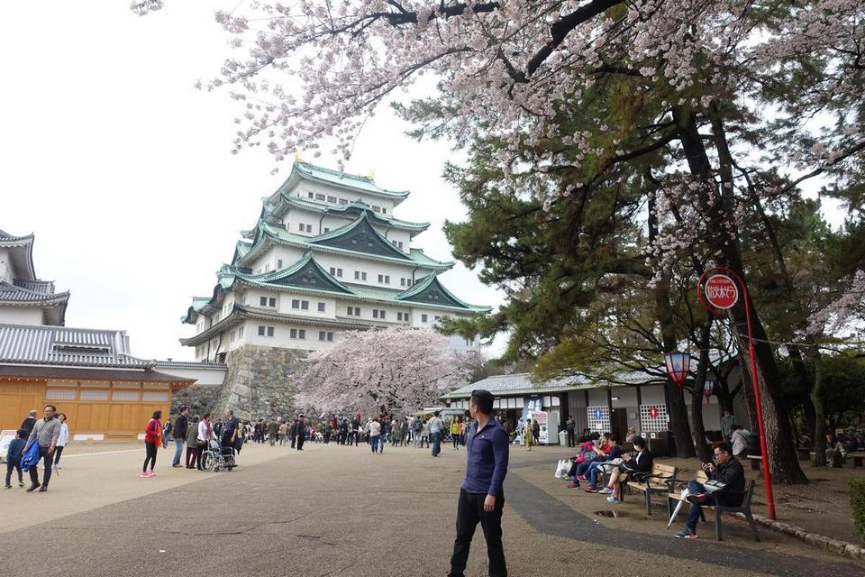 nagoya castle,nagoya travel blog,nagoya travel guide (1)