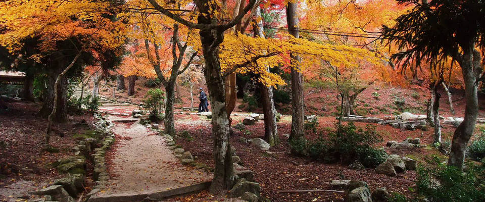 fall, autumn,hiroshima travel blog (1)