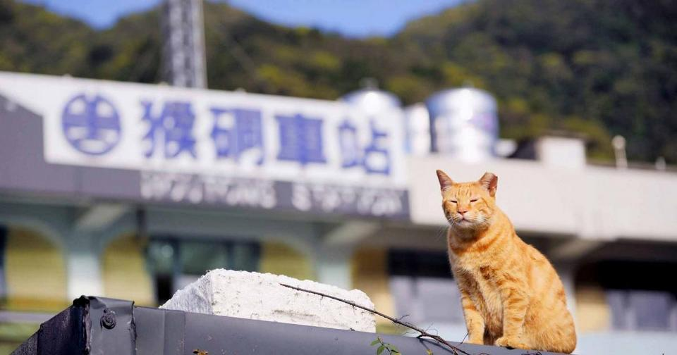 cat outside Houtong station